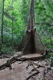 Stöd rotar treen Royaltyfri Foto