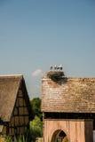 Störche auf Dachnest, Frankreich Stockfotografie