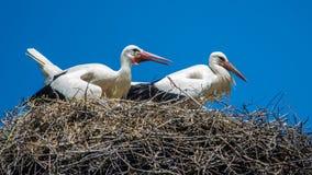 Störche auf dem Nest Lizenzfreie Stockfotos