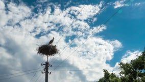 Störche, die in einem Nest auf Hochspannungsleitungen einer Säule sitzen Geschossen auf Kennzeichen II Canons 5D mit Hauptl Linse stock video