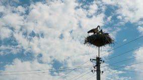 Störche, die in einem Nest auf Hochspannungsleitungen einer Säule sitzen Geschossen auf Kennzeichen II Canons 5D mit Hauptl Linse stock footage