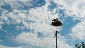 Störche in einem Nest auf einer Säule im Dorf Geschossen auf Kennzeichen II Canons 5D mit Hauptl Linsen stock video footage