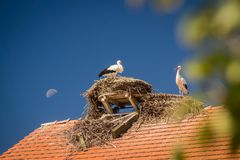 Störche in ihren Nestern auf einem Dach lizenzfreie stockfotos