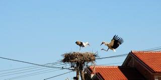 Störche im Nest stockbild