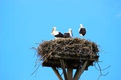 Störche im Nest auf Hausdach Stockfoto