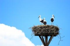 Störche im Nest auf Hausdach Stockbilder