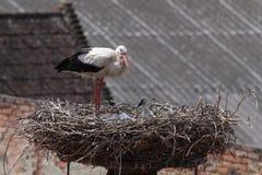 Störche im Nest vor Dächern Stockfotografie