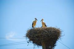 Störche ist in einem Nest Lizenzfreie Stockfotografie