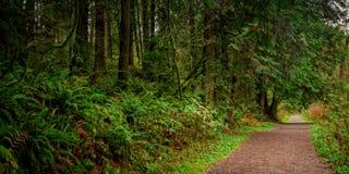 Större Vancouver område parkerar F. KR. Kanada Fotografering för Bildbyråer
