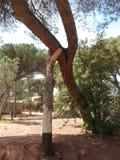 stöttad tree arkivfoto
