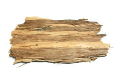 Stück der Baum-Barke Stockbilder