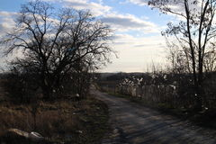 Stück des Plastiks auf Bäumen und des Zauns nahe Mülldeponie, Stupava lizenzfreie stockfotografie