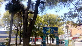 Stück-Momentwald des Baums grüner Stockbild