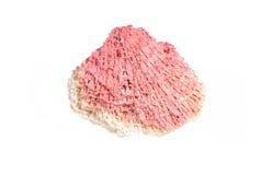 Stück von Tubiporidae vom Korallenriff lizenzfreies stockfoto