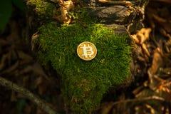 Stückchenmünze im Holz stockfoto