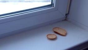 Stücke Brot auf dem Fensterbrett stock video
