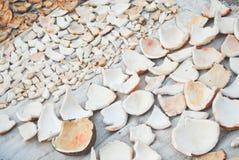 Stücke der Kokosnuss Stockbilder