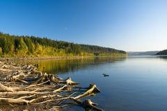 Stümpfe auf Ufer von See im Herbst Lizenzfreie Stockbilder