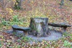 Stümpfe draußen benutzt als Tabelle und Bänke im Wald Stockfotos