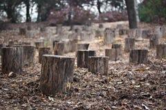 Stümpfe im Herbstwald Lizenzfreie Stockbilder