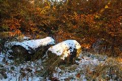 Stümpfe mit Schnee Lizenzfreie Stockfotografie