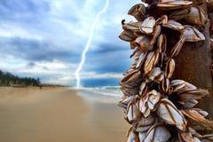 Stürmen Sie mit einem Blitz am Strand mit Miesmuscheln auf einem Bambusstock Lizenzfreie Stockfotos