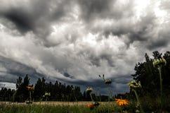 Stürmische Himmel über einem Feld Stockfotografie