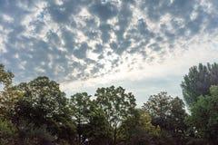 Stürmische Wolken über der Baumgrenze forrest mit blauem und rotem Himmel Stockfoto