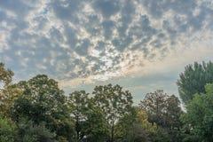 Stürmische Wolken über der Baumgrenze forrest mit blauem und rotem Himmel Lizenzfreie Stockfotografie