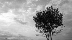 Stürmische Wolken, die über Baumschattenbild überschreiten stock video footage