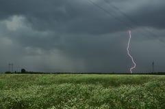 Stürmischer drastischer Himmel mit Blitz und einem schönen blühenden Feld mit weißen Blumen Lizenzfreie Stockfotos