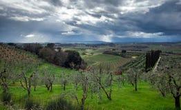Stürmischer Himmel über grünem Feld Stockbild