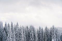 Stürmischer Himmel und schneebedeckter Wald gestalten in den Bergen landschaftlich Lizenzfreies Stockbild
