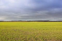 Stürmischer Himmel und Weizen Lizenzfreie Stockbilder