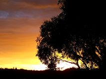 Stürmischer Sonnenuntergang durch das Schattenbild eines Baums Lizenzfreies Stockbild