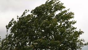 Stürmischer Wind stock footage