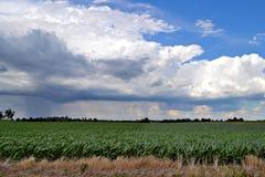 Stürmisches Feld Lizenzfreie Stockfotos