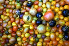 Stützbare Tomate, die in Süd-Florida bewirtschaftet stockfotografie