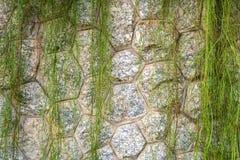 Stützmauer der Steineinfassung Lizenzfreie Stockbilder