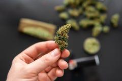 Stępia i zapalniczki Marihuana pączkuje w ręce na czarnym tła tle dla kopii przestrzeni z bliska CBD i THC na pączkach zdjęcia royalty free