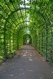 ST Πετρούπολη Ρωσία Bosket στο θερινό κήπο στοκ εικόνες