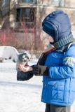 ST 彼得斯堡,俄罗斯- 3月05 :孩子喂养从手,俄罗斯-一只鸽子2017年3月05日的 免版税库存图片