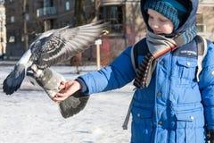 ST 彼得斯堡,俄罗斯- 3月05 :孩子喂养从手,俄罗斯-一只鸽子2017年3月05日的 免版税库存照片