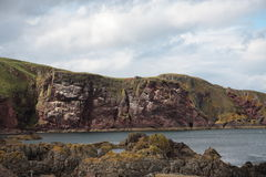 St Abbs. Birds nesting on the rock face of St Abbs rocky shoreline Royalty Free Stock Image