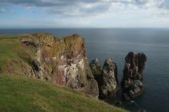 St Abbs, Northumberland i Szkockie granicy, Obrazy Royalty Free