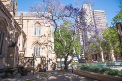St- Andrew` s Kathedrale und Sydney Town Hall stockfotografie