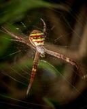 St Andrews pająk Zdjęcia Royalty Free