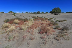 St. Anthony Sand Dunes-Red Road Dunes Idaho Stockbilder