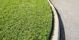 Free St. Augustine Grass Royalty Free Stock Photography - 158895787