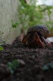 st basseterre kitts Стоковое фото RF